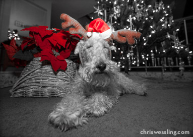 wire fox terrier costume